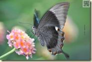Schmetterling in der Wilhelma