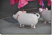 Helium-Schweine