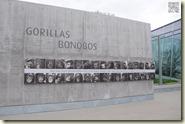 die neue Anlage für Gorillas und Bonobos
