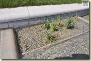 Wasserlauf mit Pflanzbereichen