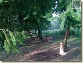 Rotwild im Rauch-Zoo