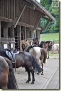 die Pferde sind bereit für den Ausritt