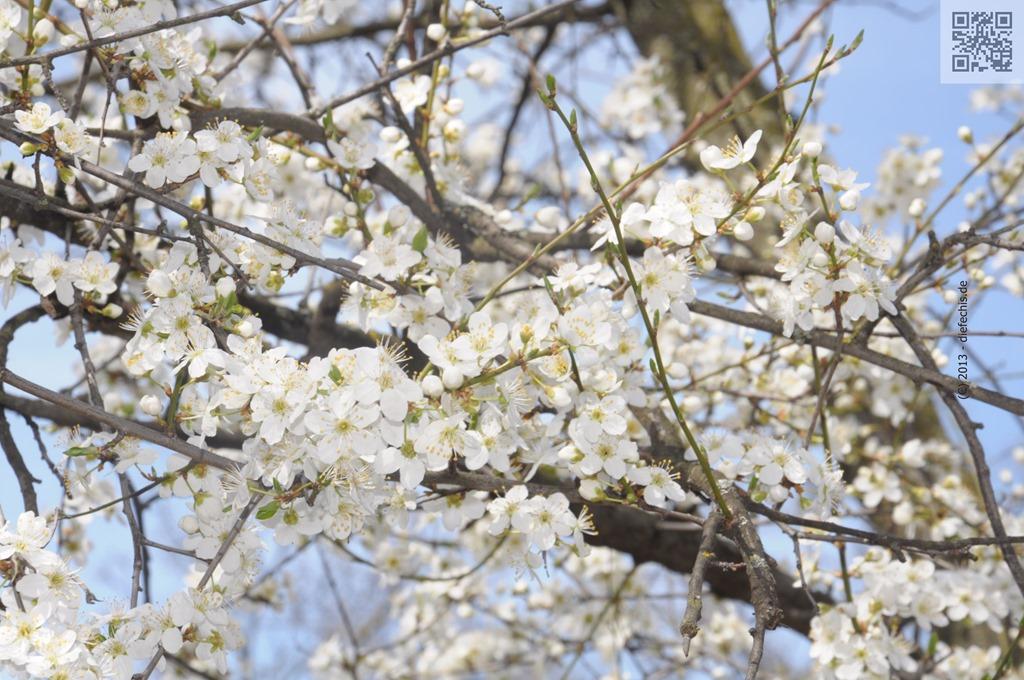 Blumen « der-Fechis-Blog