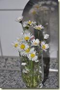 das Gänseblümchen-Glas