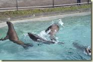 die Seelöwen