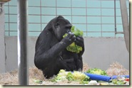 Fütterung der Affen