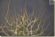 Lichtreflexe am kahlen Baum