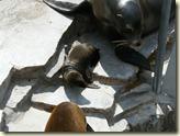 der kleine Seelöwe mit Mama und Papa