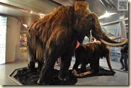 die neue Mammutfamilie