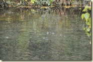 das Wasser blubbert - Kohlesäureblasen