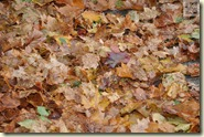die Zeit des Herbstlaubs beginnt