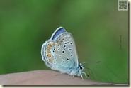 Schmetterling auf dem Fuß