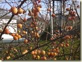 was sind das für Früchte?